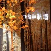 """飞鸟和新酒2019秋季新品发布——藏在银杏叶里的""""秋·天"""""""